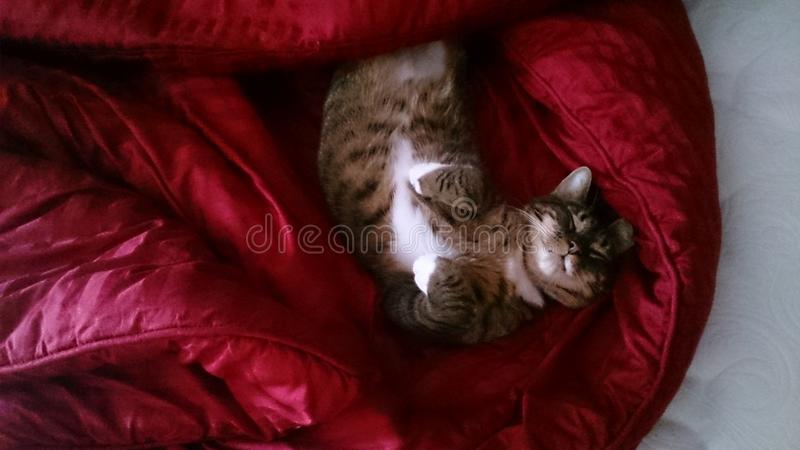 Relaksujący kot na koc fotografia stock