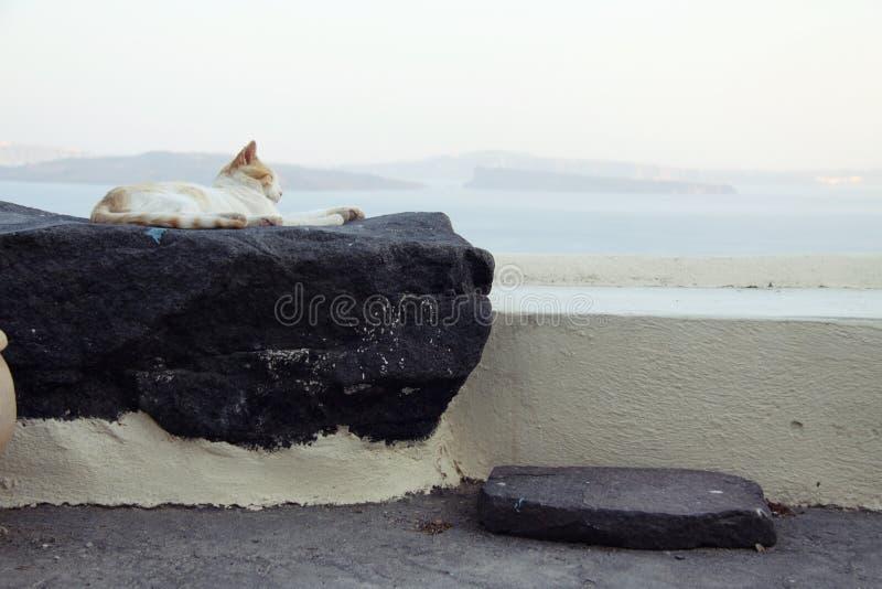 Relaksujący kot przy Oia, Santorini obrazy royalty free