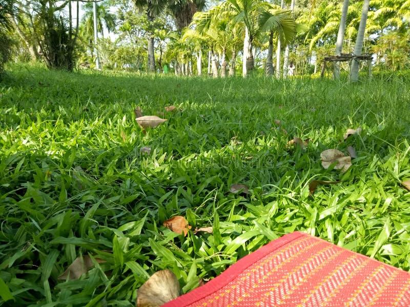 Relaksuje drzewo stylu życia ogrodowego wakacje obraz stock