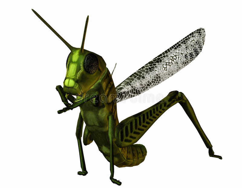 Download Related Grasshopper Stock Photo - Image: 28406670