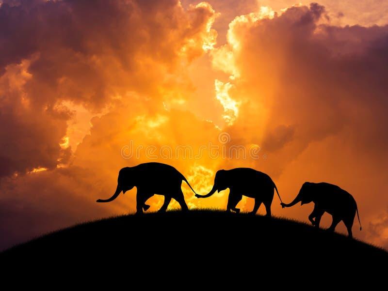 Relations d'éléphants de silhouette avec la queue de famille de prise de tronc marchant ensemble sur le coucher du soleil photographie stock libre de droits