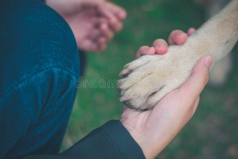 Relationship between human and dog stock photos