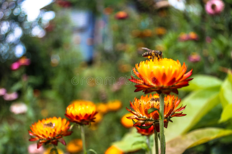 Relationships of Flowers and honey Bee stock photo