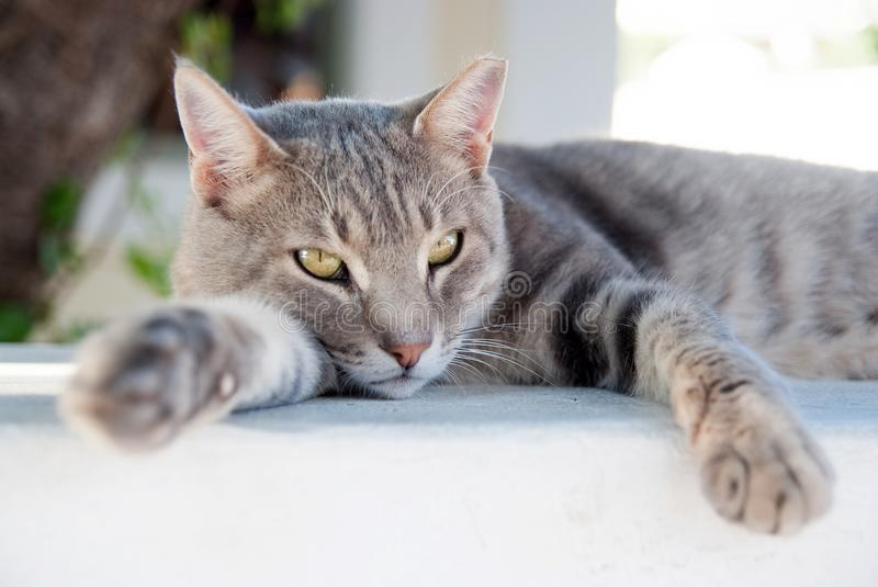 Relax. Shorthair cat relax in Patmos, Greece. cat food. healthy pet - happy owner. Cat with green eyes outdoor. Cute pet stock photo