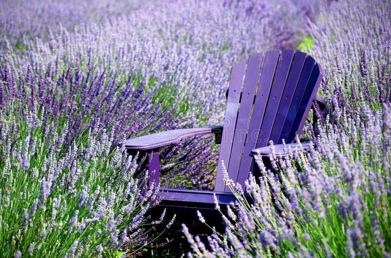 Relaxamento na alfazema imagem de stock