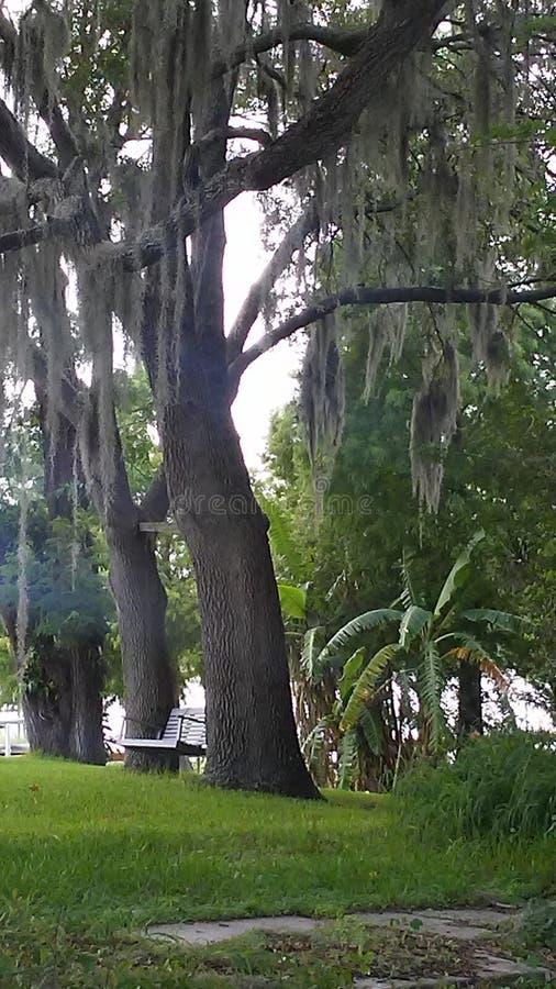 Relaxamento por um lago que olha o musgo espanhol balançar foto de stock royalty free