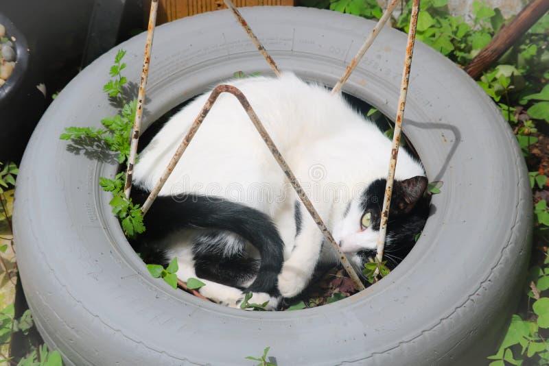 Relaxamento tomado gato e pronto para sujar fotos de stock