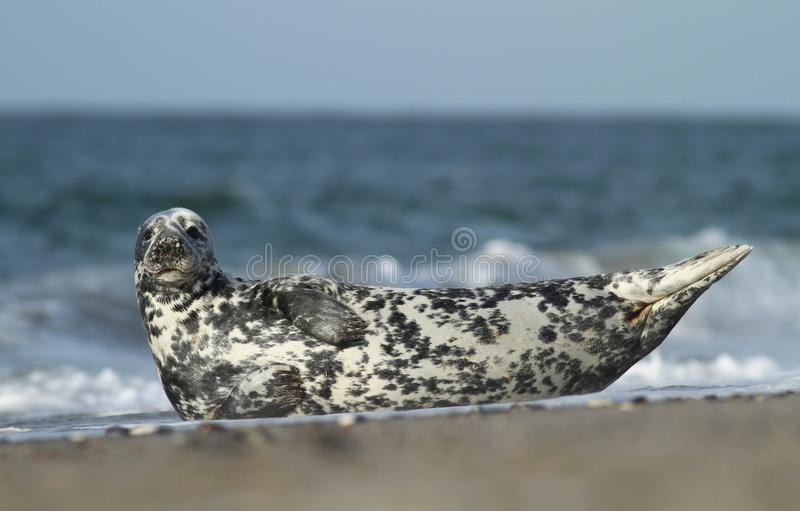 Download Relaxation stock image. Image of water, relaxation, wild - 19300979