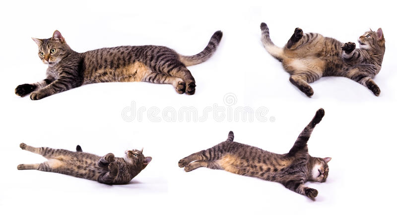 Relaxation Cat Stock Photography