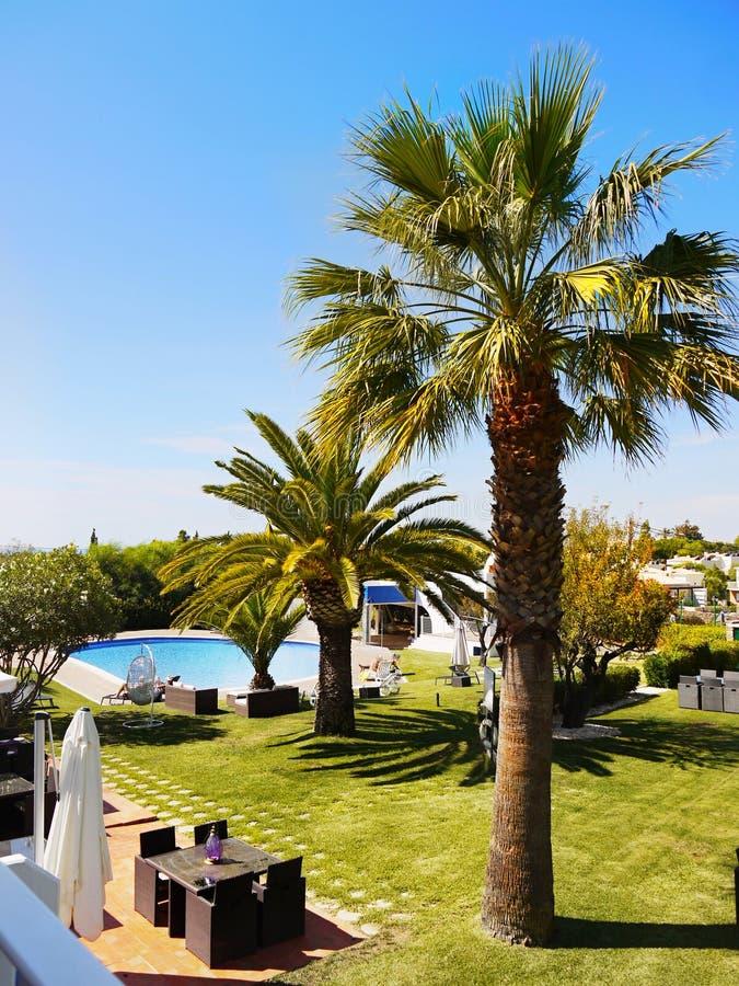 Relaxation de station thermale d'hôtel, jardin de paumes, piscine extérieure images stock
