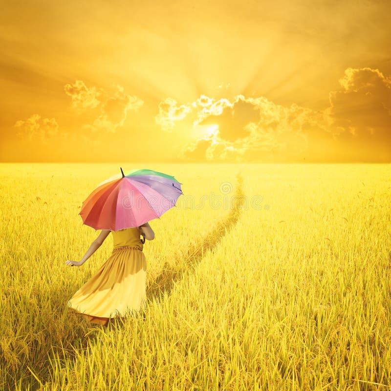 Relaxe a mulher que guarda o guarda-chuva colorido no campo e no por do sol amarelos do arroz fotografia de stock royalty free