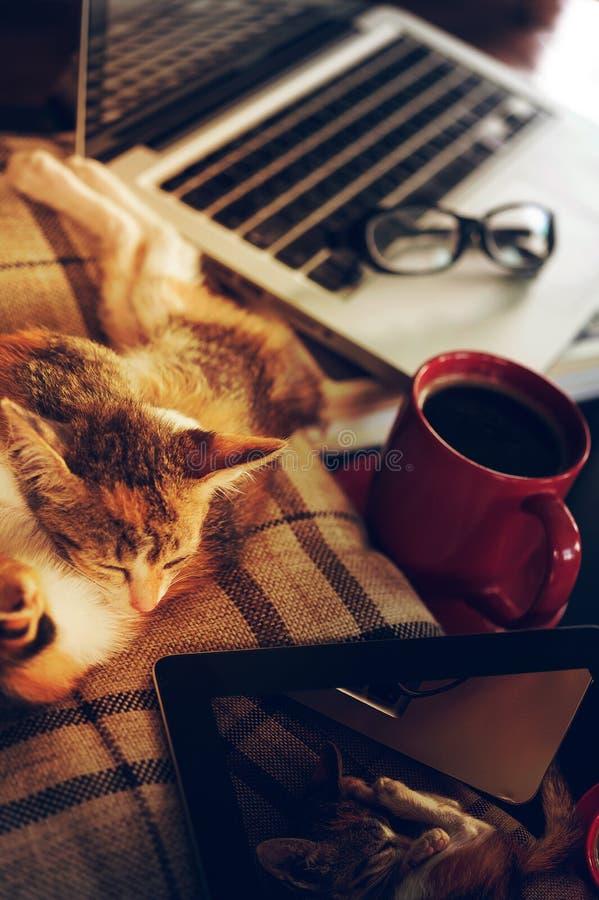 Relaxe o tempo no lugar de trabalho imagens de stock