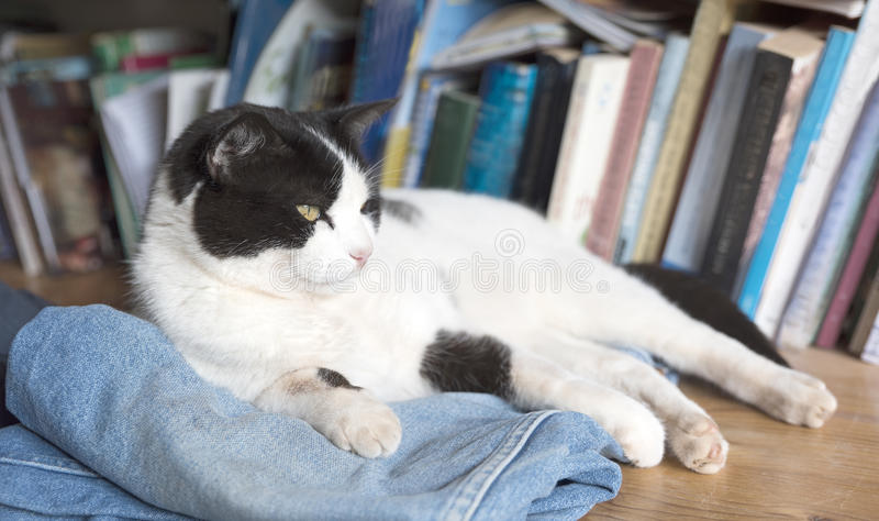 Relaxed black and white cat. stock photo