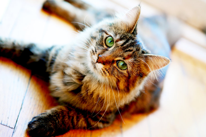 Relaxed cat royalty free stock images