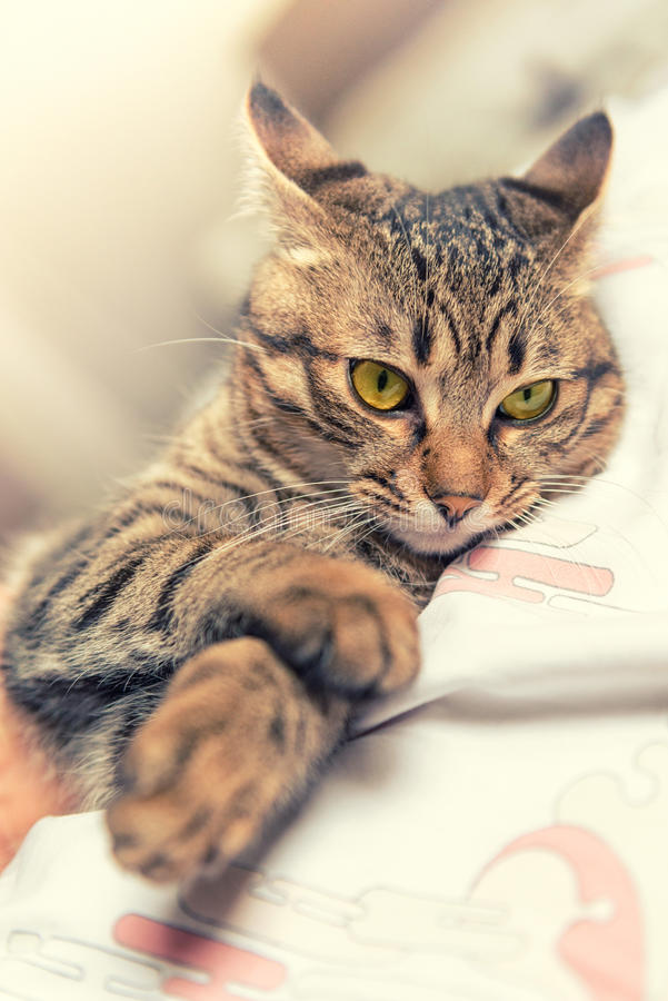 Relaxed cat royalty free stock photo