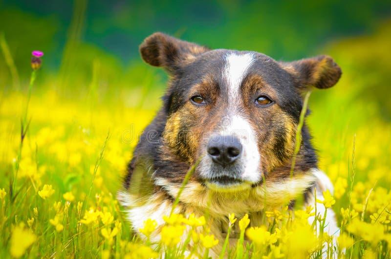 Relaxed dog stock image