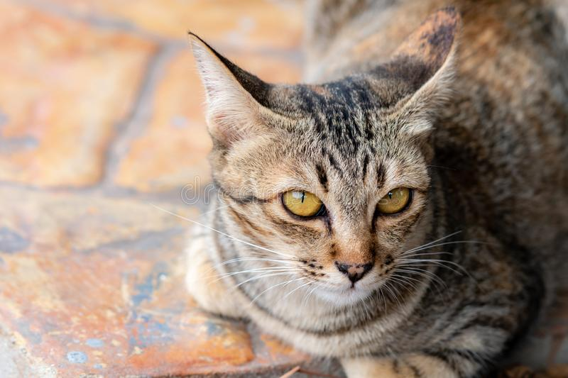 Portrait of brown-eyed cat stock photo