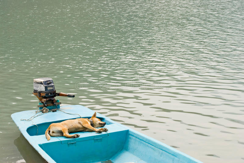 Download Relaxing Dog In Vacation On The Boat Stock Photo - Image: 10901972