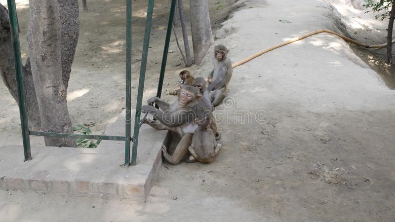 Monkeys Life royalty free stock photography