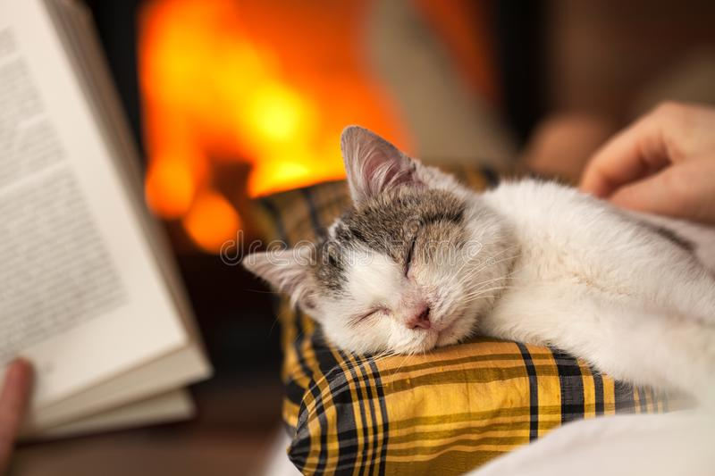 Relaxing by the fire together with a kitten and a good book. Closeup, focus on the cat, shallow depth royalty free stock image