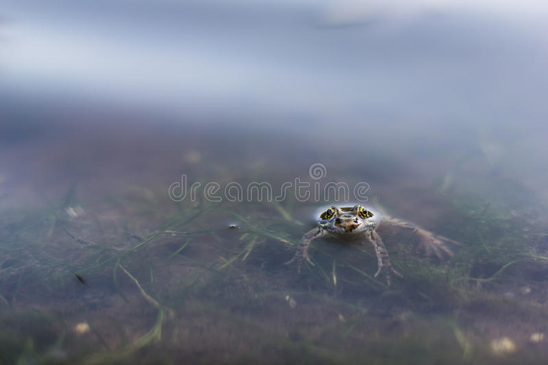 Download Relaxing Frog stock image. Image of chilling, wild, frog - 33071629