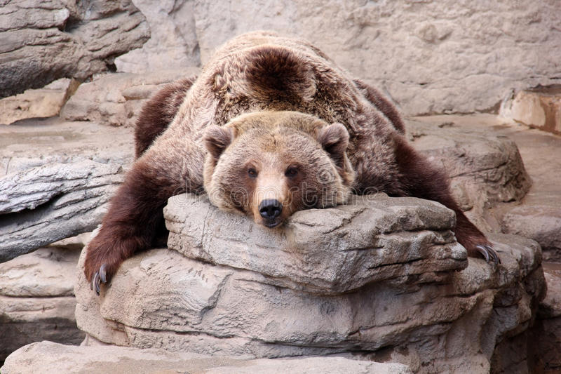 Relaxing Grizzly Bear Teddy Bear Rug royalty free stock photos