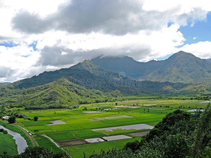 Relaxing landscape hawaii. With taro fields stock images