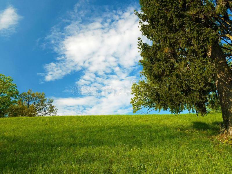 Relaxing nature scenery. Colorful nature scenery with trees, grass and blue sky stock image