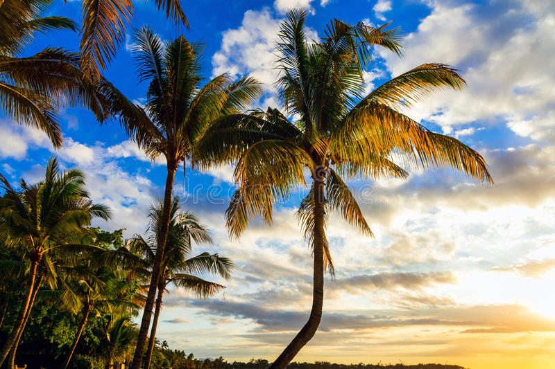 Relaxing scenery -tropical sunset. Tropical holidays in Mauritius island stock image