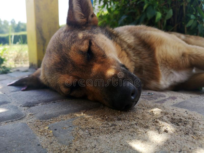 Relaxing sleeping dog on the street royalty free stock photography