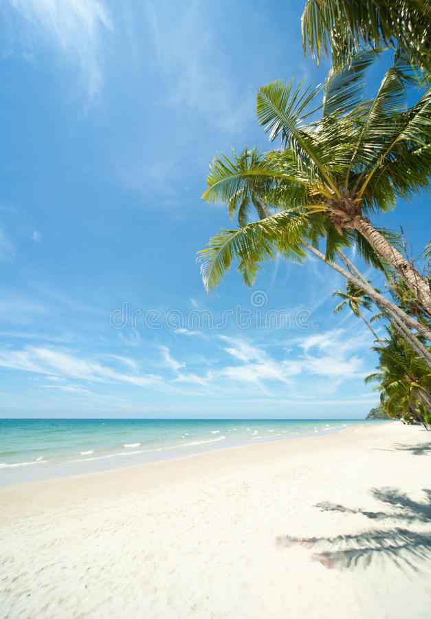 Relaxing under a palm trees on loneliness beach royalty free stock image