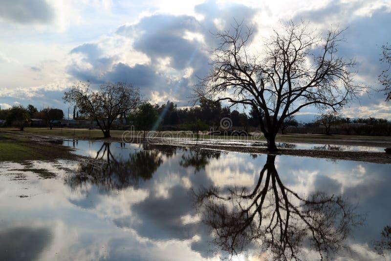 Relection av ett träd arkivfoton