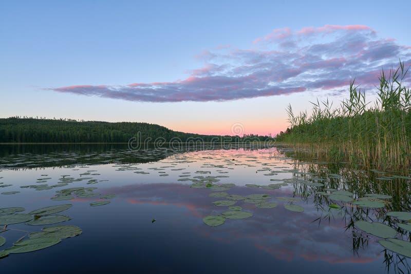Relfections róseo em um lago imagens de stock