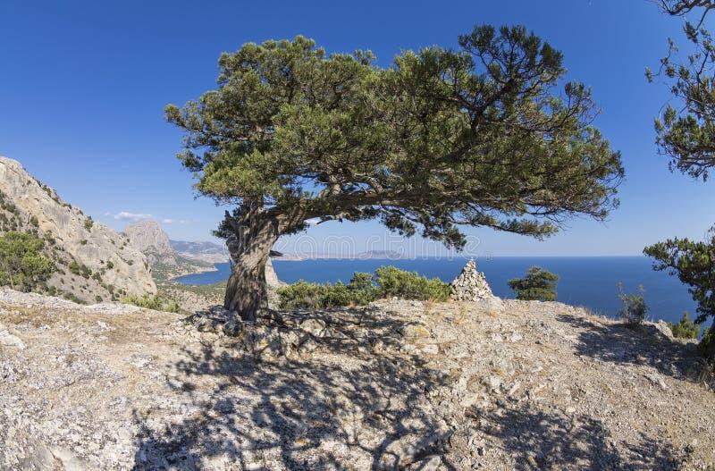 Relictenträd på en bergöverkant crimea arkivfoton
