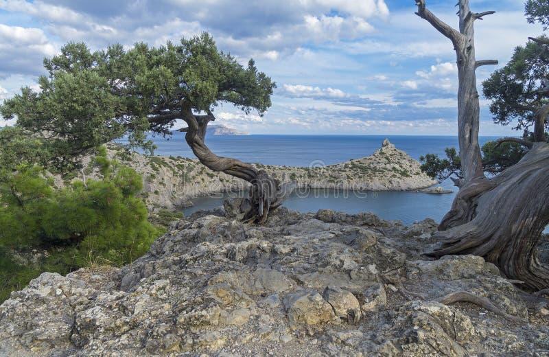 Relictenträd på en klippa ovanför havet crimea arkivfoto