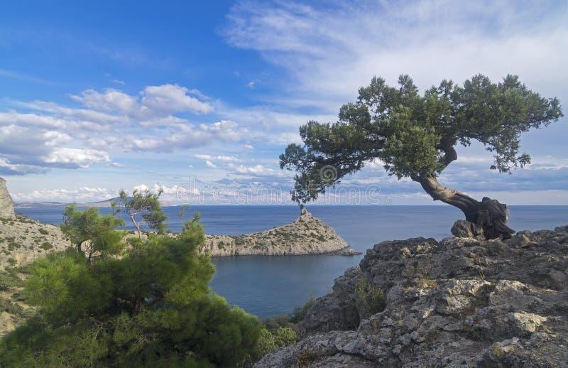 Relictenträd på en klippa ovanför havet crimea royaltyfri fotografi