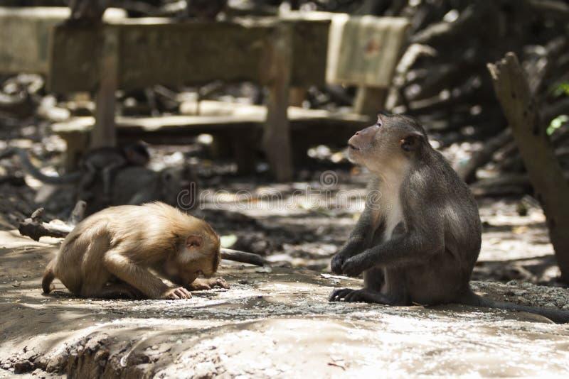 Religion de singe images libres de droits