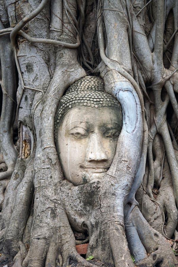 Religion för lopp för Buddha för buddism för stadsAyutthaya Thailand tempel royaltyfria bilder
