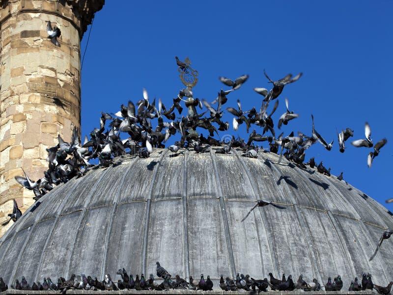 Religion för symbol för moskébyggnadsislam royaltyfri bild
