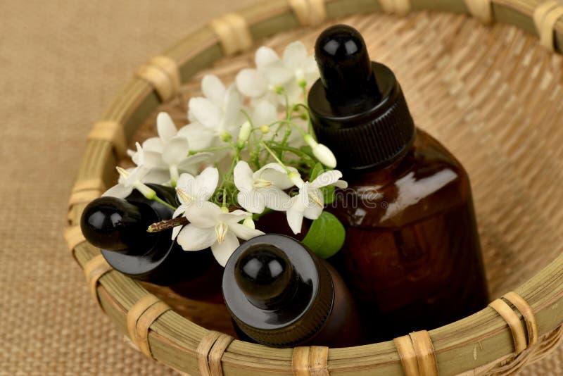 Religiosa Benth di Wrightia , i fiori per usare l'estratto e l'olio essenziale hanno proprietà medicinali fotografia stock