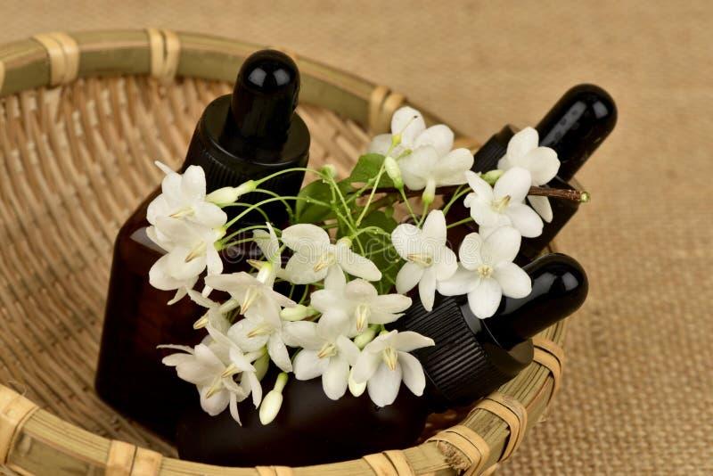 Religiosa Benth di Wrightia , i fiori per usare l'estratto e l'olio essenziale hanno proprietà medicinali immagini stock