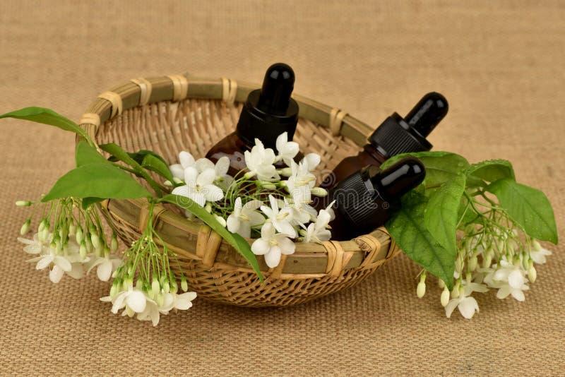 Religiosa Benth di Wrightia , i fiori per usare l'estratto e l'olio essenziale hanno proprietà medicinali immagine stock