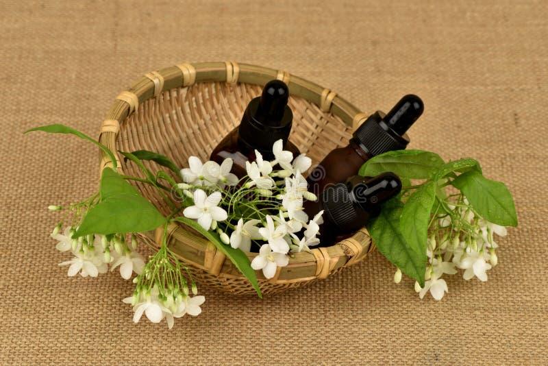 Religiosa Benth di Wrightia , i fiori per usare l'estratto e l'olio essenziale hanno proprietà medicinali immagine stock libera da diritti