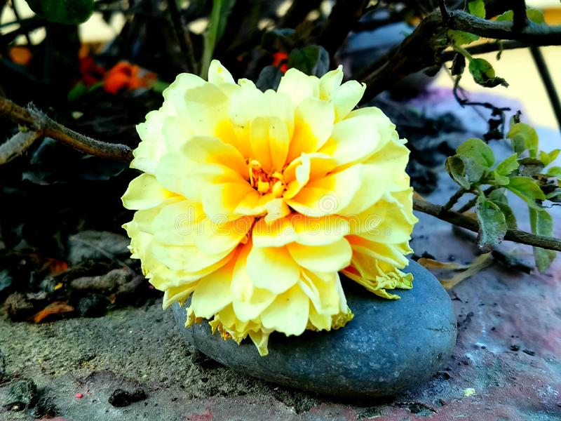 Religious flower royalty free stock photography