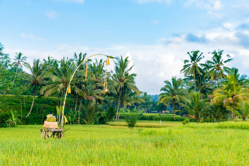 Religious paddy shrine and offerings to the gods in rice fields, Bali royalty free stock photos