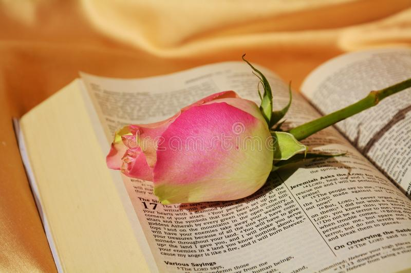 Religious symbols. Beautiful rose on an opened Bible, suggesting beauty, distinction and religious feelings royalty free stock photos