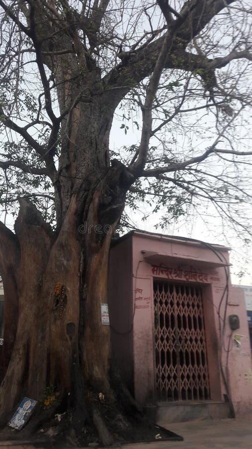 Religon tree temple photoframe royalty free stock images