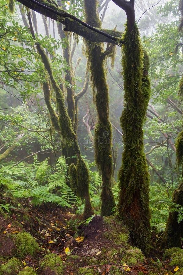 Relikskog i dimman fotografering för bildbyråer