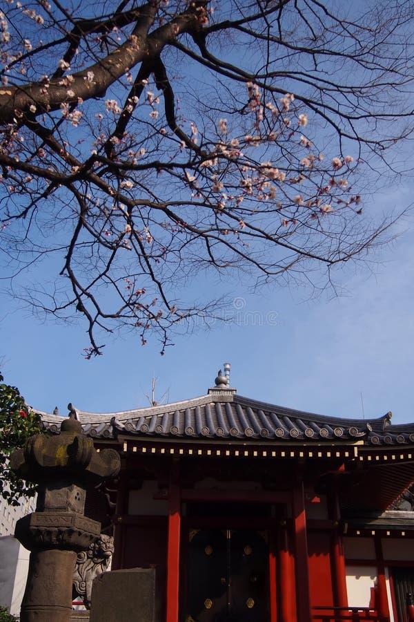 Relikskrin tempel, offentliga ställen i Japan och där är ett härligt träd för körsbärsröd blomning framme arkivbilder