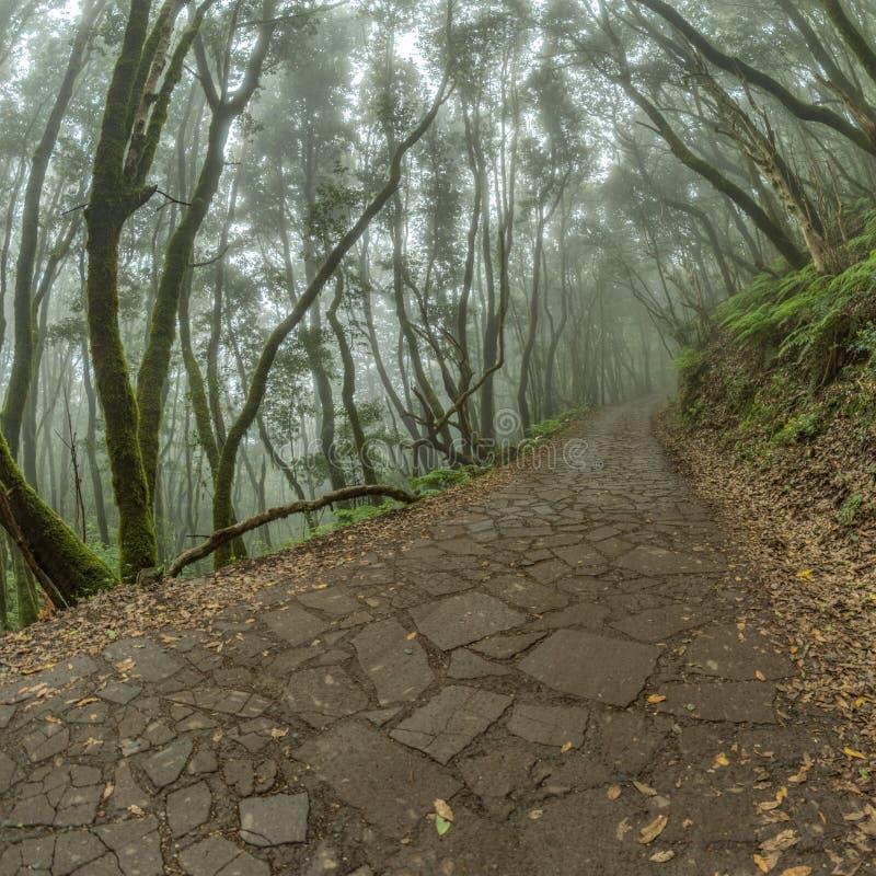 Reliktowy las na skłonach pasmo górskie Garajonay park narodowy Gigantyczni bobki i Drzewny wrzos wzdłuż przesmyka fotografia royalty free